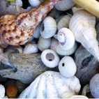The Shell Collection