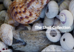 The Shell Collection Full Logo