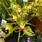 The Orchid Show 2015
