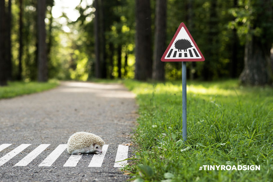 1438185137-tiny-hedge-hog-
