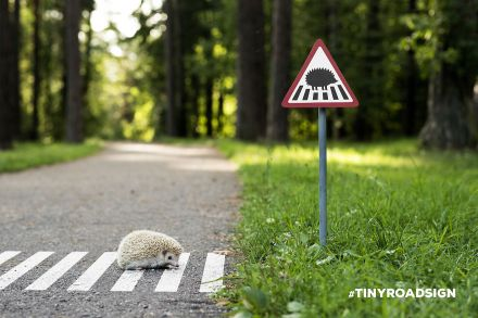 1438185137-tiny-hedge-hog-