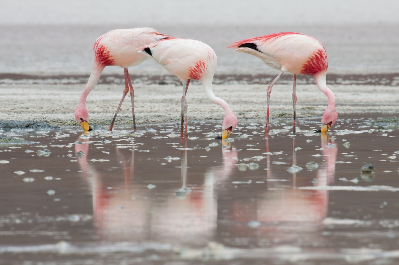 James_Flamingos_MC